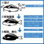 魚種別の旨い頃合い