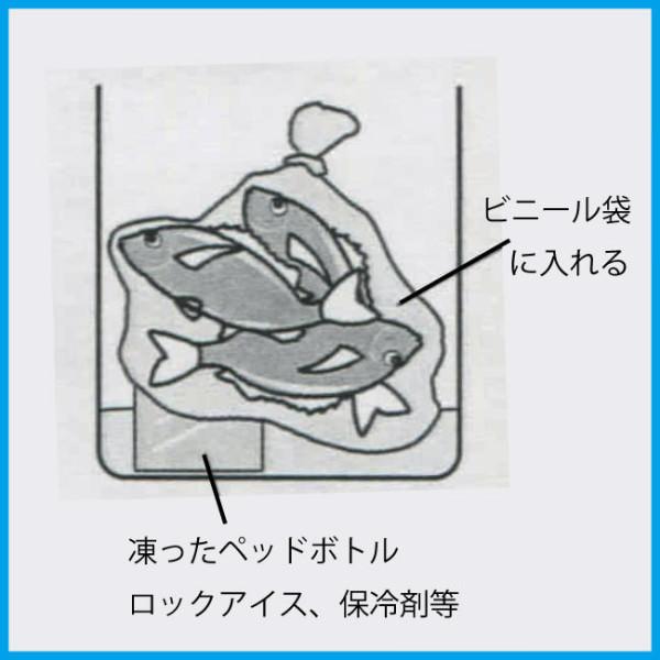 魚の冷やし方(段階2)