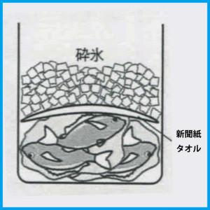 魚の冷やし方(段階3)