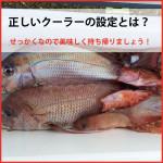 魚の持ち帰り方 「低温管理について」