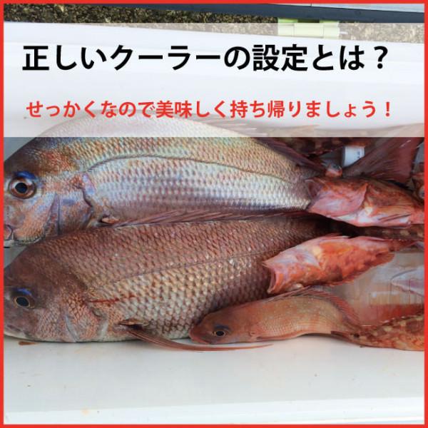 クーラーでの魚